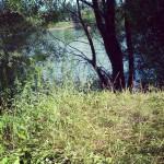 Gras und Wasser