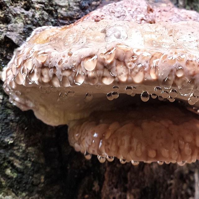 Der schwitzende Pilz